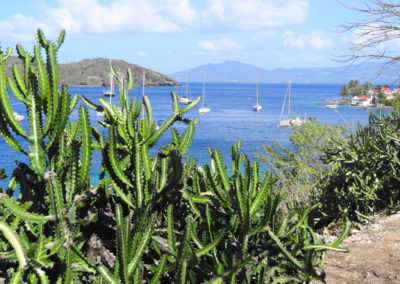 Cactus Les Saintes Guadeloupe